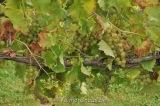 vigne benoit lecomte22