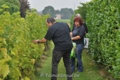 vigne benoit lecomte04