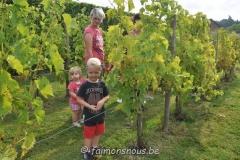 vigne benoit lecomte21