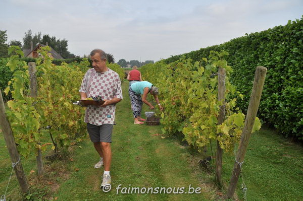 vigne benoit lecomte03