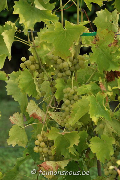 vigne benoit lecomte23