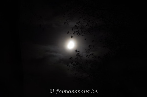 halloween113