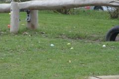 chasse-oeufs-borlatis-marie008