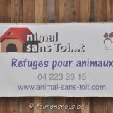 animal sans toit062