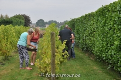 vigne benoit lecomte05