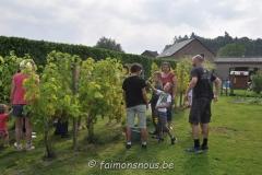 vigne benoit lecomte16