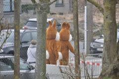 chasse-oeufs-borlatis010
